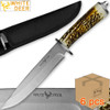 Case of 6pcs WHITE DEER Apprentice 12.5in Knife 440 Stainless Steel Sim-Stag Handle