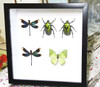 green insects beetles bugs butterflies dragonfly Bits & Bugs