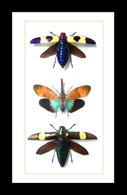 Beetles insects bug combination Bits & Bugs