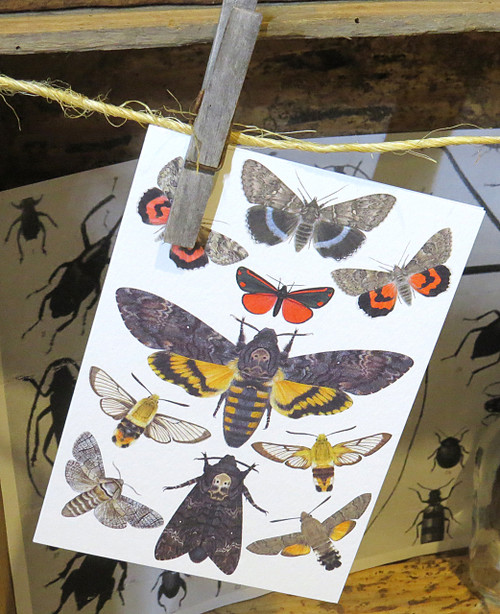 Insect bug bee butterfly dragonfly taxidermy entomology beetle moth