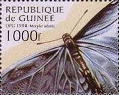 Image result for Morpho adonis stamp