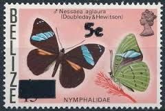 Image result for nessaea  stamp