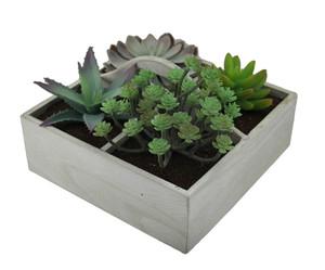 https://s3.amazonaws.com/zeckosimages/UMA-70007-wood-box-succulent-1I.jpg