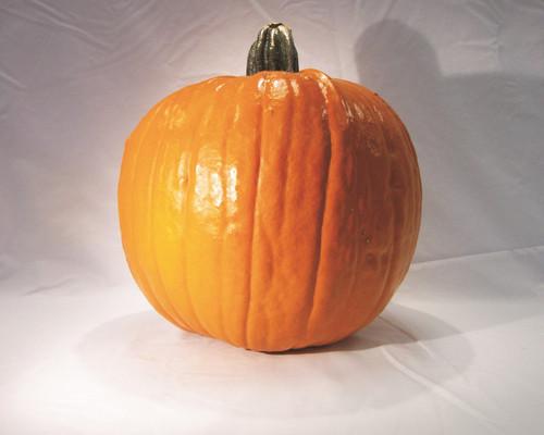 Gold Rush Pumpkin