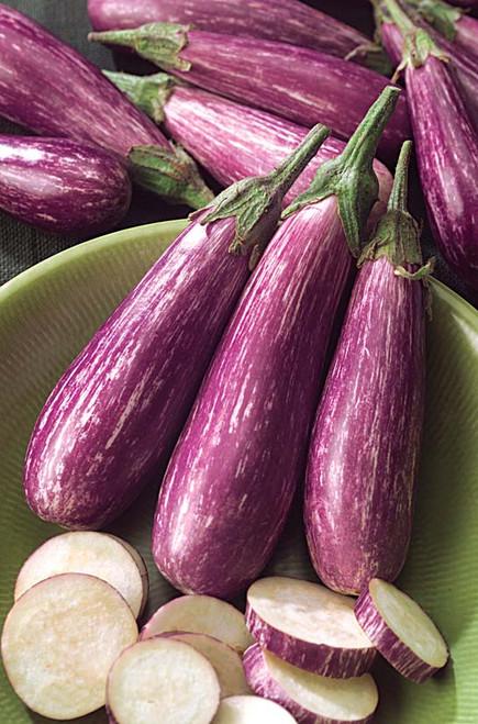 Fairytale F1 Eggplant
