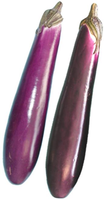 Purple Shine F1