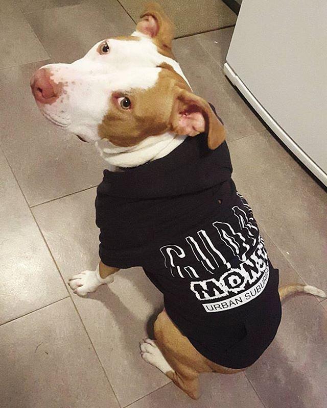 CUDDLE MONSTER Dog Zip-Ups
