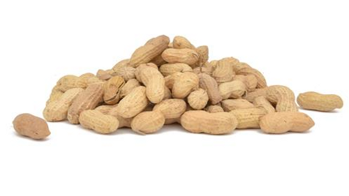 Raw In-shell Peanuts
