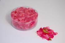 Flower Petal Box 554 x Delphinium Hot Pink