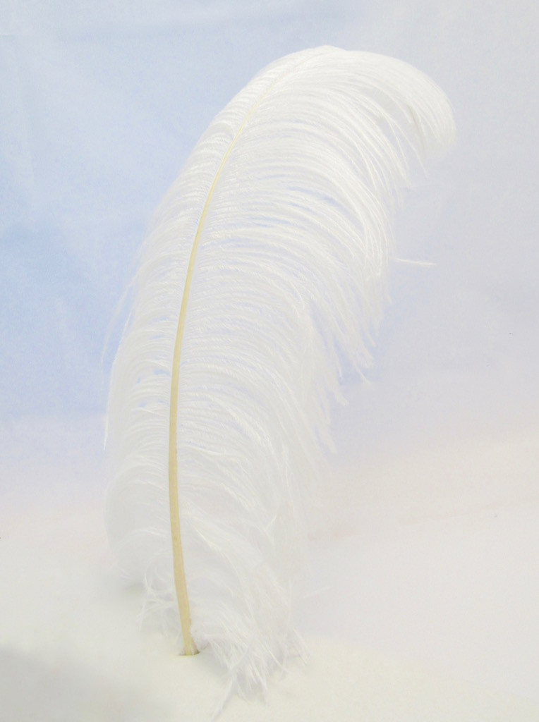 White Ostrich Feather Plume