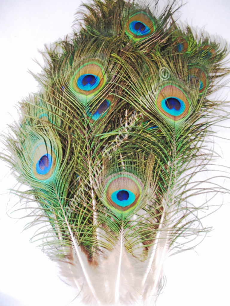 Peacock Feathers mini, per hundred