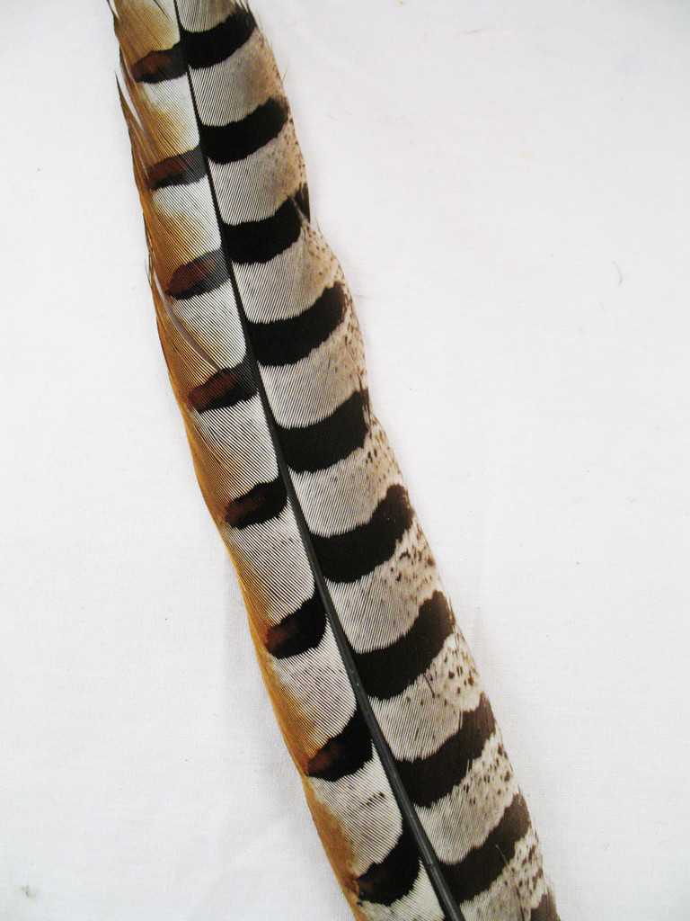 Pheasant Tail Feathers, REEVES, 15-20 inch, per each