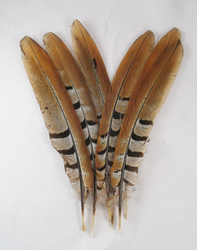 Pheasant Tail Feathers, REEVES, 5-10 inch, per 6