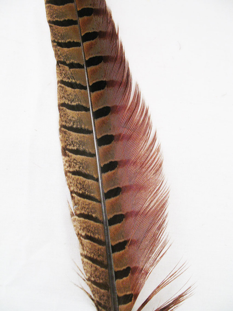Pheasant Tail Feathers, RING-NECKED,  15-20 inch, per each