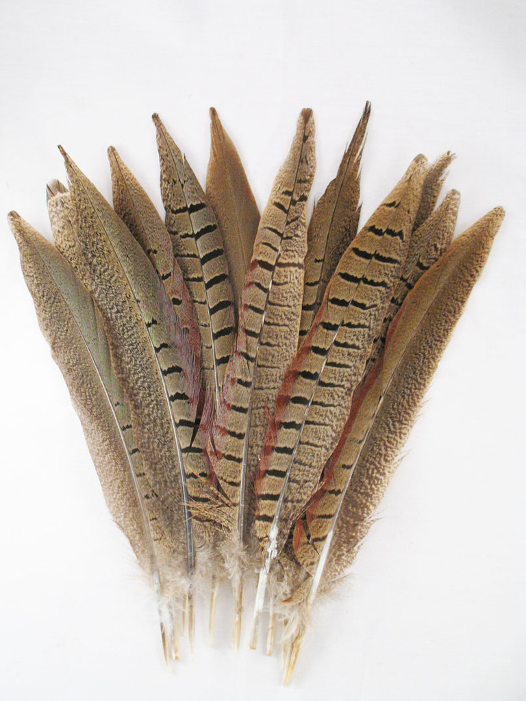 Pheasant Tail Feathers, RING-NECKED, short, 5-10 inch, per dozen