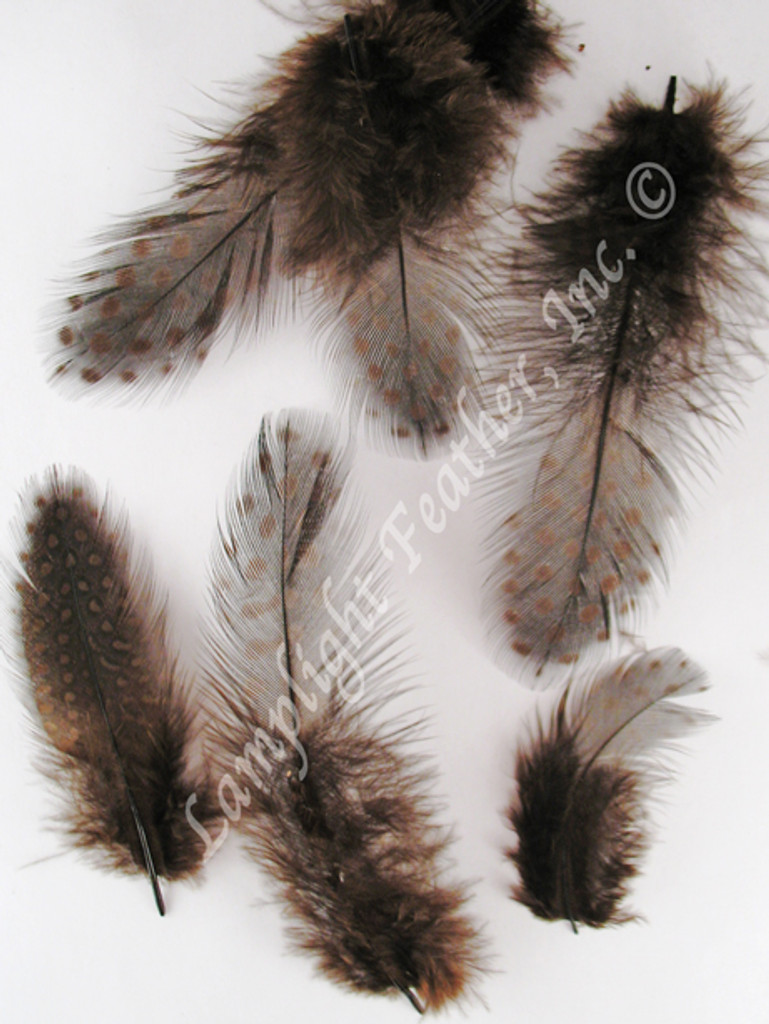 Guinea PLUMAGE loose Brown per half ounce
