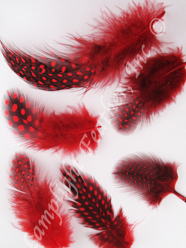 Guinea Plumage Craft Feathers Red per half ounce