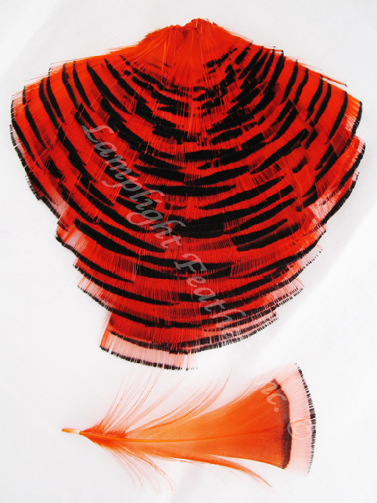 TIPPET CAPE, GOLDEN Pheasant, dyed Orange, per EACH