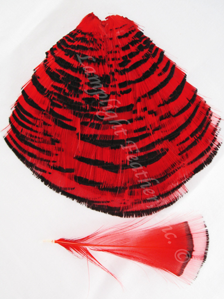TIPPET CAPE, GoldEN Pheasant, dyed Red, per Each