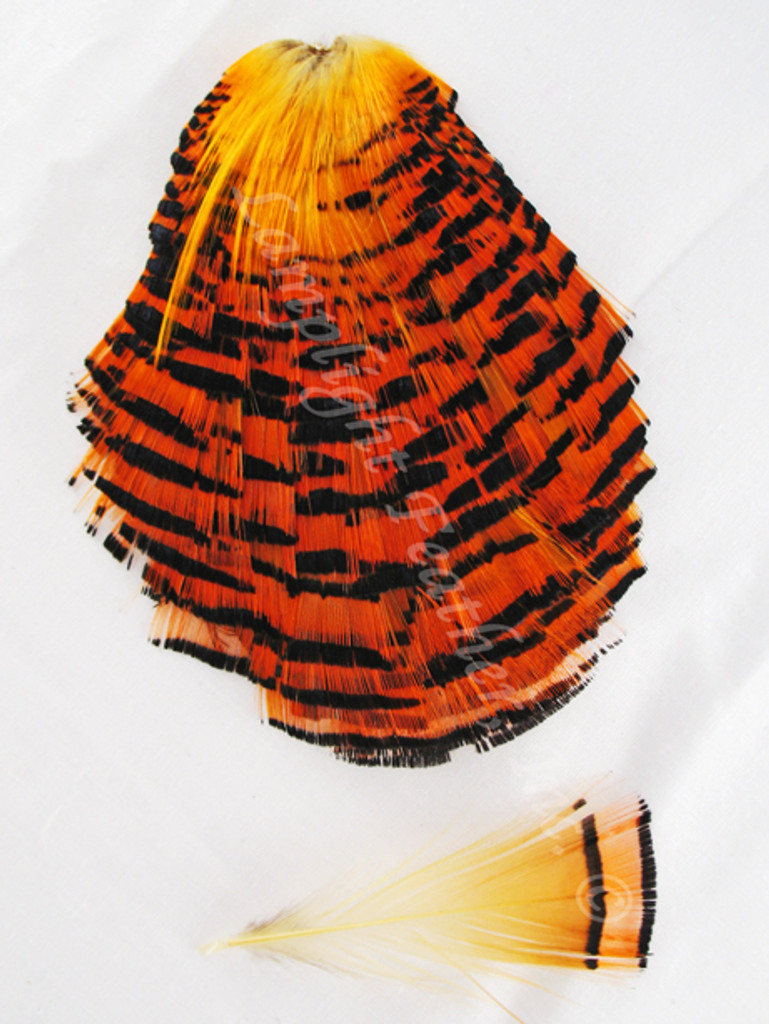 TIPPET CAPE, GOLDEN Pheasant, NATURAL, per EACH