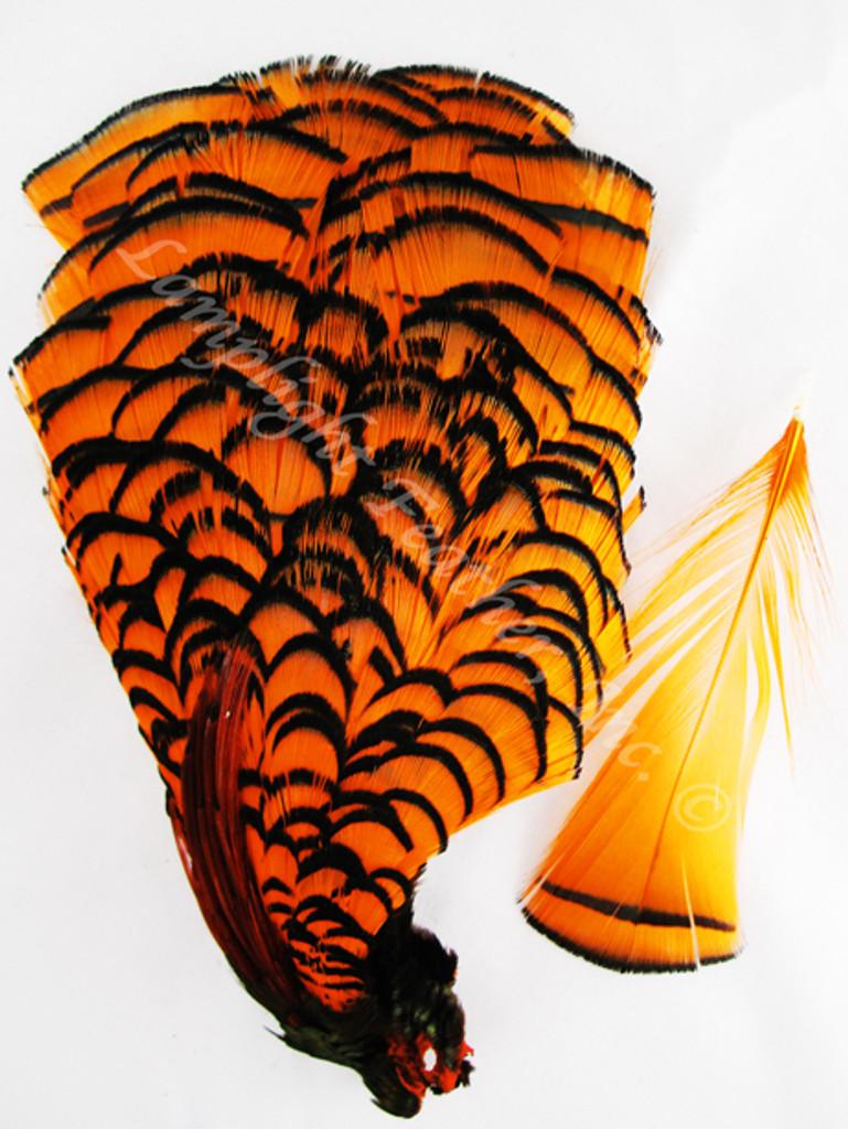TIPPET CAPE, LADY AMHERST Pheasant, dyed Orange