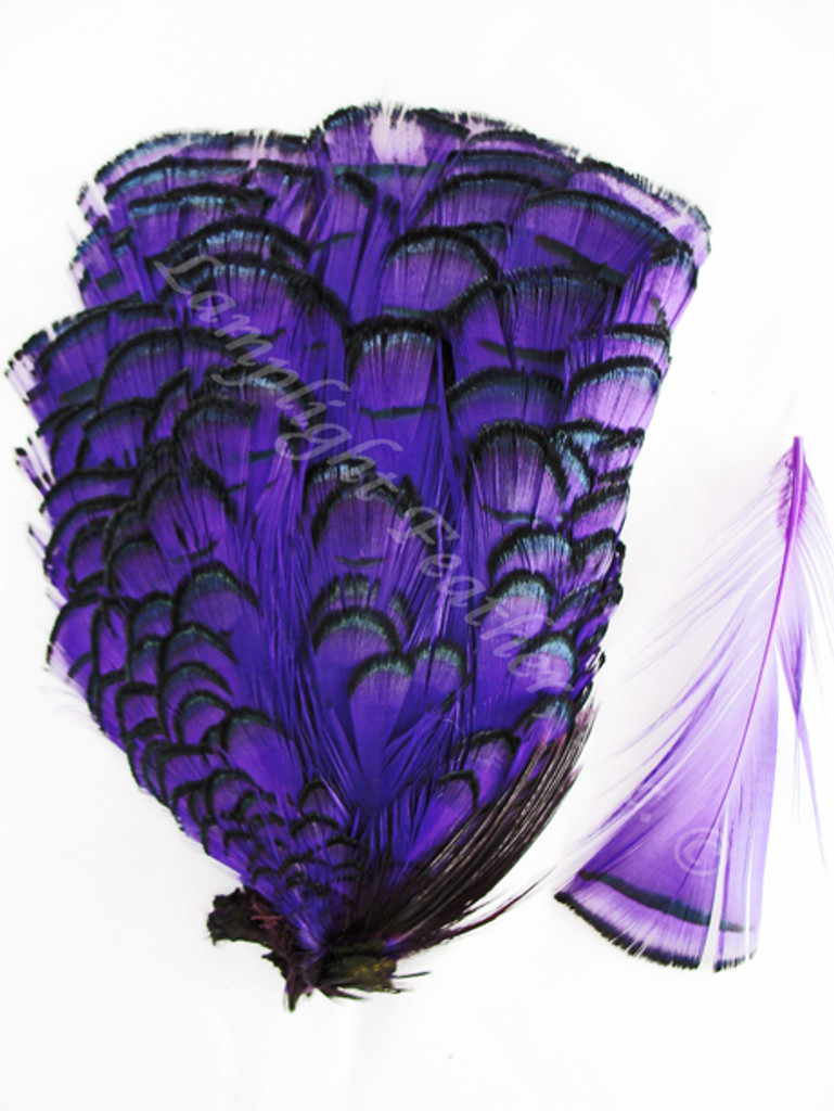 TIPPET CAPE, LADY AMHERST Pheasant, dyed Purple