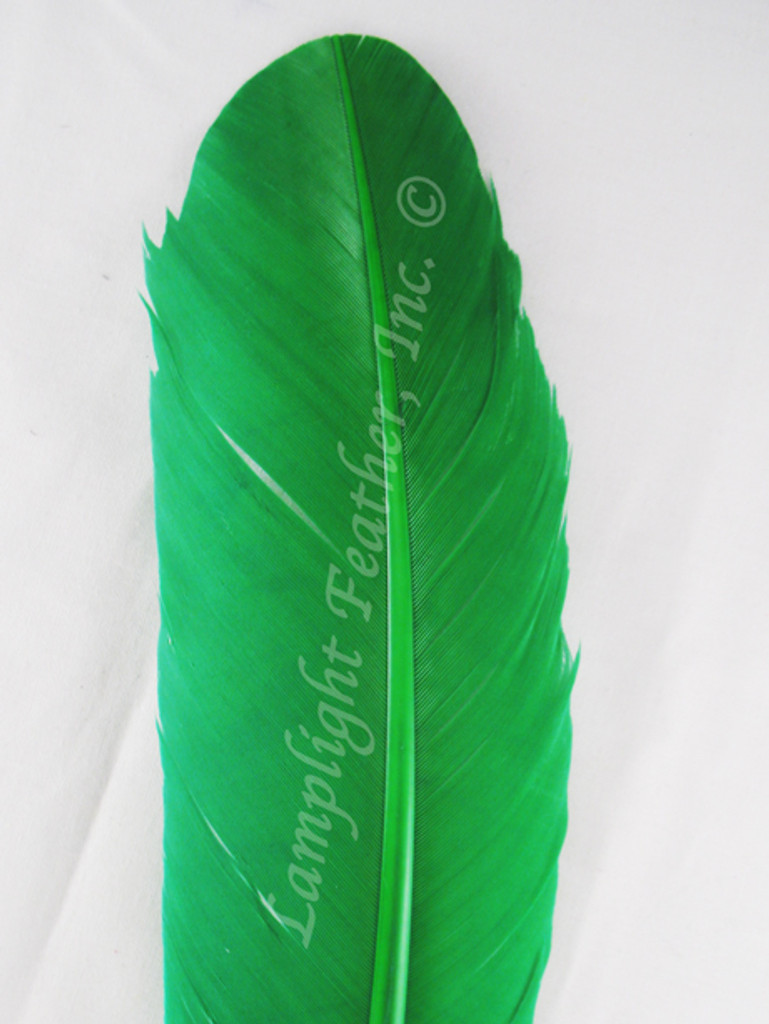Turkey Feathers, wing rounds, dyed Green, per DOZEN