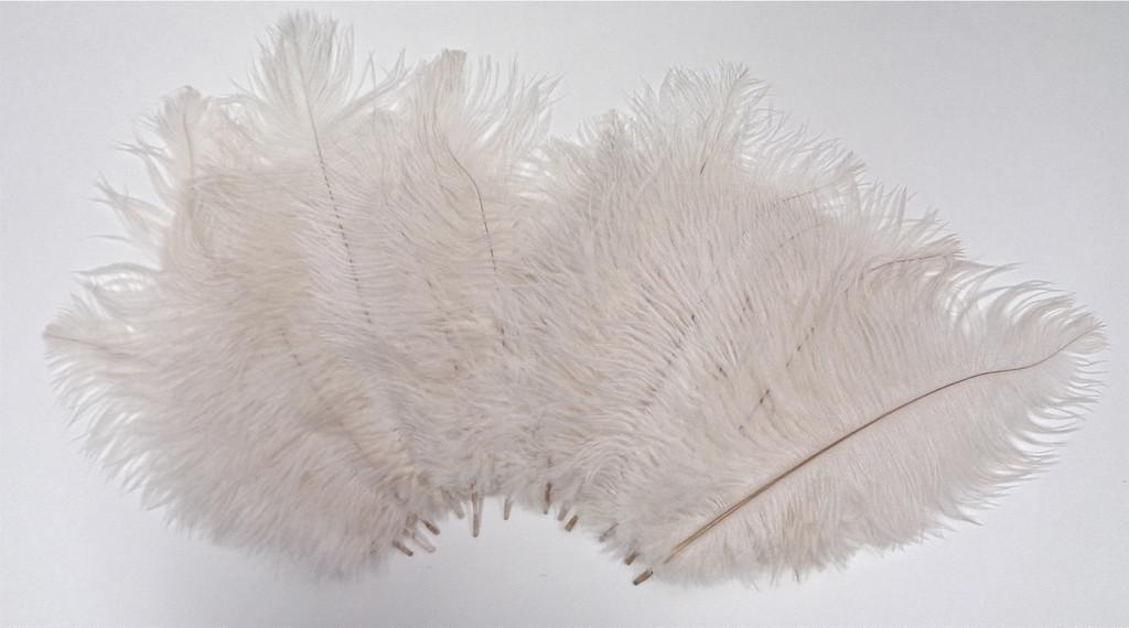 White Ostrich Feathers 8-12 inch size per Dozen