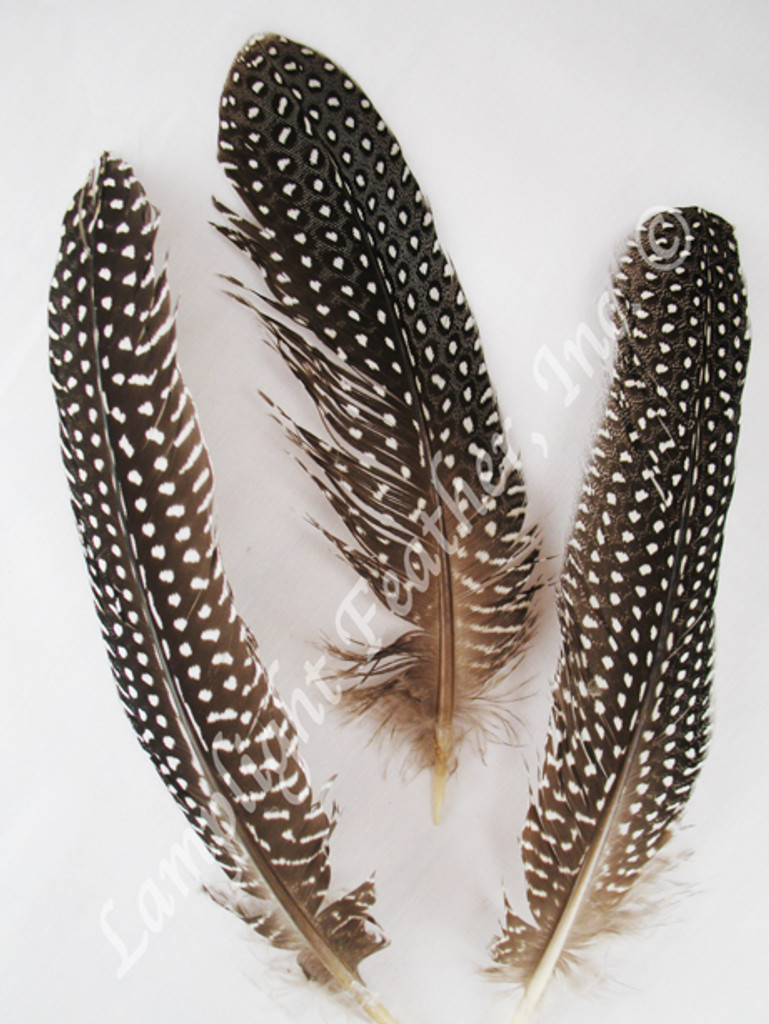GUINEA Feathers, Wing Quills, Natural, per pack of 25