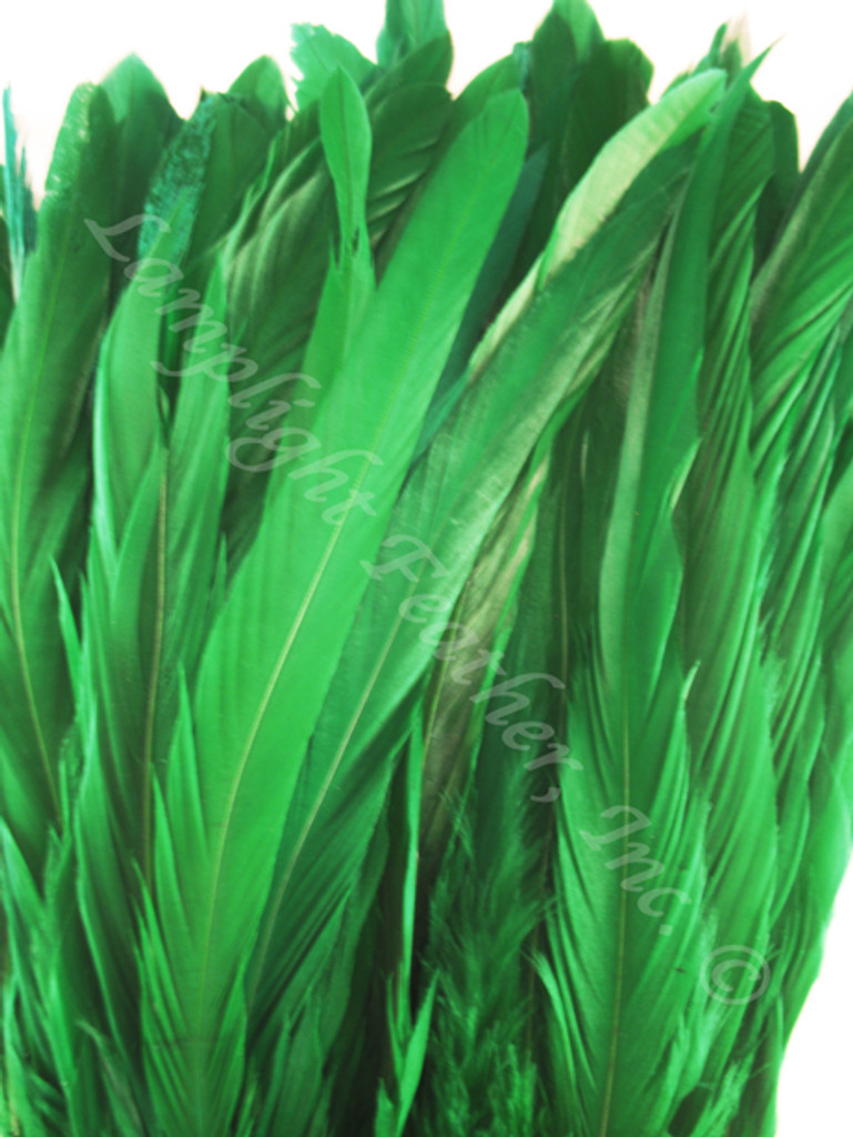 COQUE, 5-8 inch, GREEN, per 25