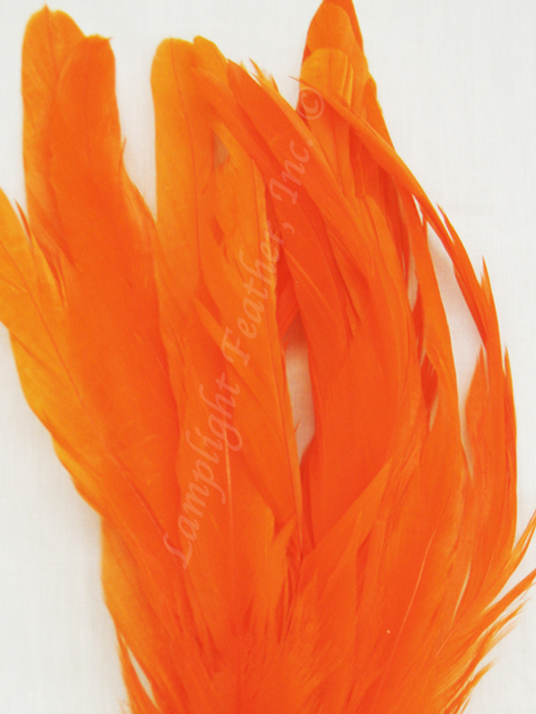 COQUE, 5-8 inch, Orange, per 25