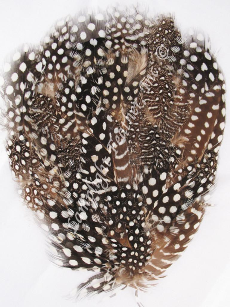 Feather Pad, GUINEA, per each