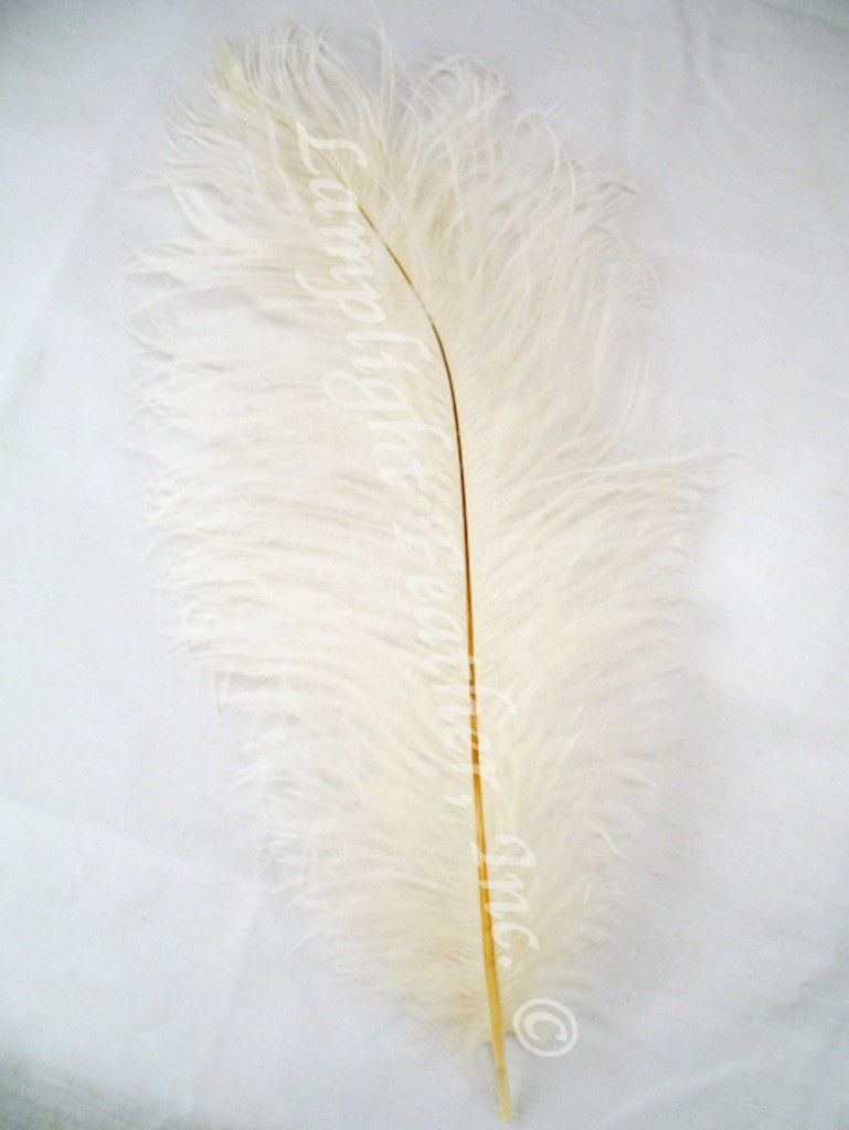 Ivory Ostrich feather, long ostrich feather