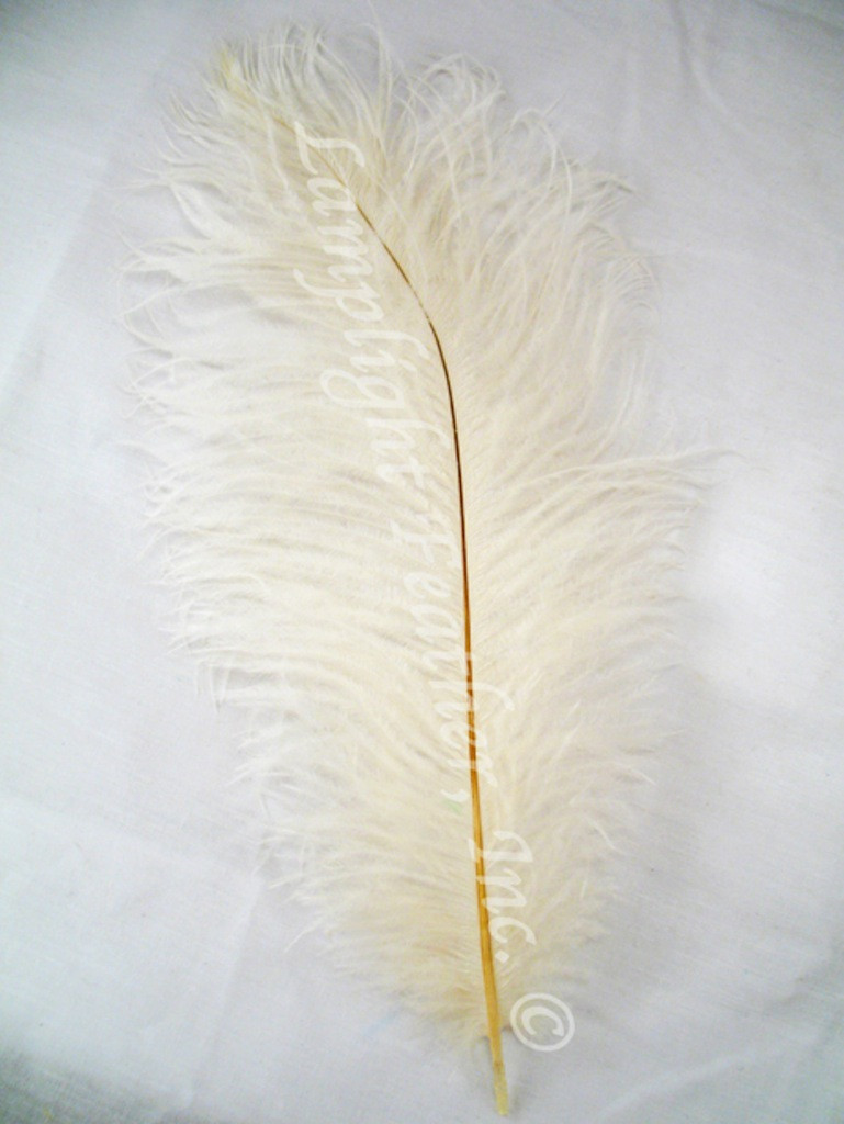 Ivory Ostrich Feathers