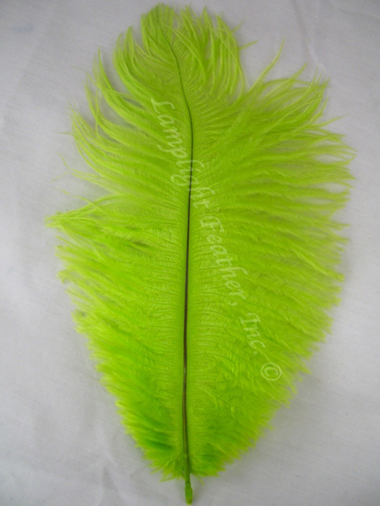 Lime Ostrich Feathers