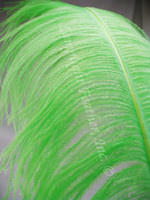 Lime Ostrich Feather Plume Premium Large 24-30 inch per Each