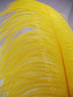 Yellow Ostrich Feather Plume Premium Large 24-30 inch per each