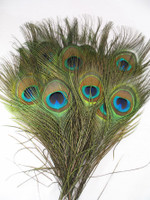 Peacock Feathers SHORT STALK