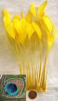 STRIPPED Coque, Yellow, Pack of 25