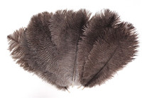 Natural Black Ostrich Feather 8-12 inch size per Each