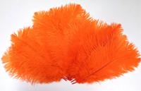 Orange Ostrich Feather 8-12 Inch size per Each