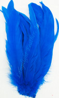 Coque, 7-10 inch, Royal Blue, per hundred