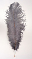 Gray Ostrich feather, long ostrich feather