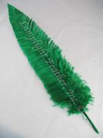 OSTRICH NANDU, LONG, Green 16-19 inch per Each