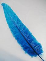 OSTRICH NANDU, LONG, Turquoise 16-19 inch per each
