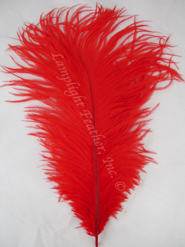 Ostrich Feathers and P...Ostrich Feathers For Sale