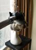 Kitten Ears Version under natural sunlight