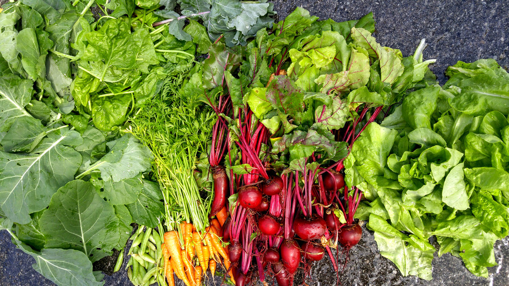 A variety of vegetables grown in the GreenStalk
