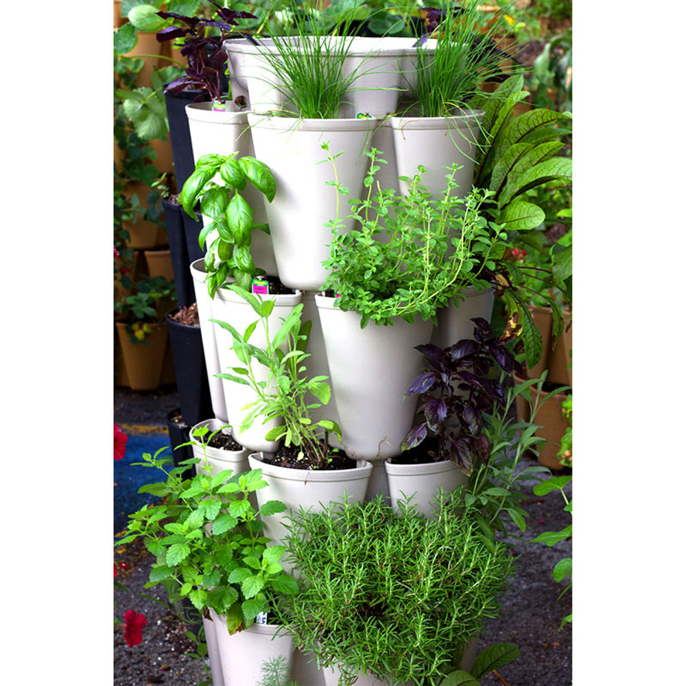 Organic Herb Tower Seeds