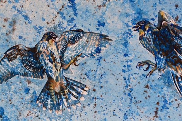 Blue Series: Peregrine Falcon Juveniles